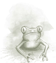 Furyfrog of Wichita